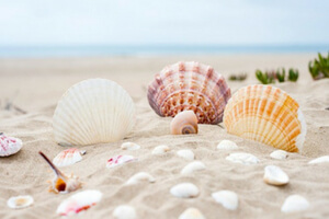 seashells provide lots of beach activities