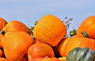 Pumpkins – 17 Interesting Facts